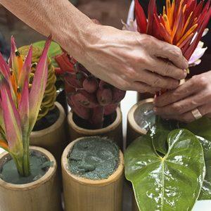 flores tropicais