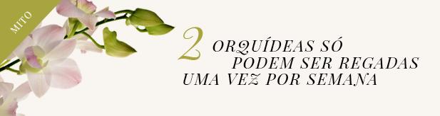 orquideas-2-mito