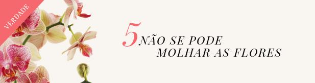 orquideas-5