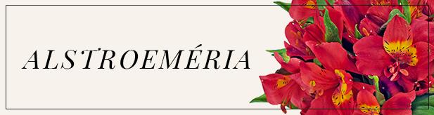 flores e amores- ALSTROEMÉRIA