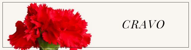 flores e amores-cravo