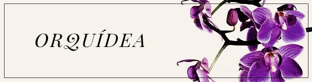 flores e amores-orquidea