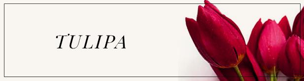 flores e amores-tulipa