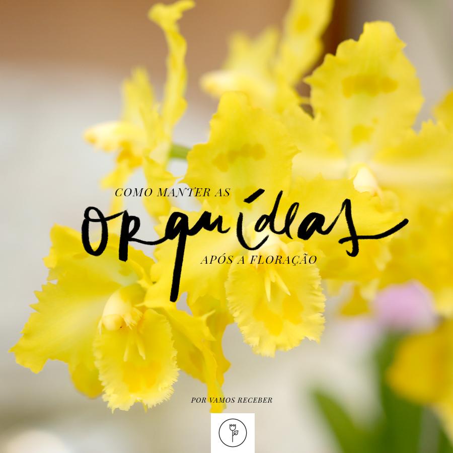 como manter orquideas apos floracao