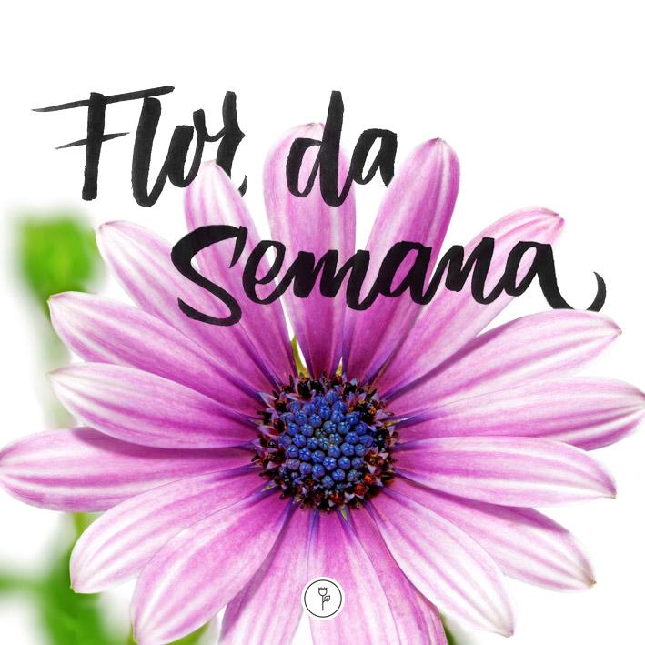 FlorDaSemana_14.10