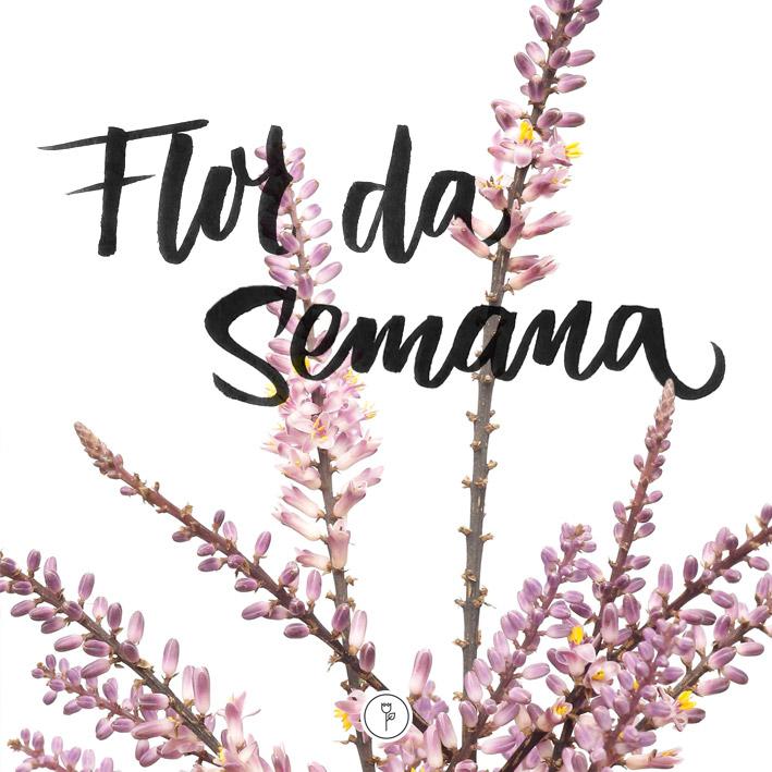 FlorDaSemana