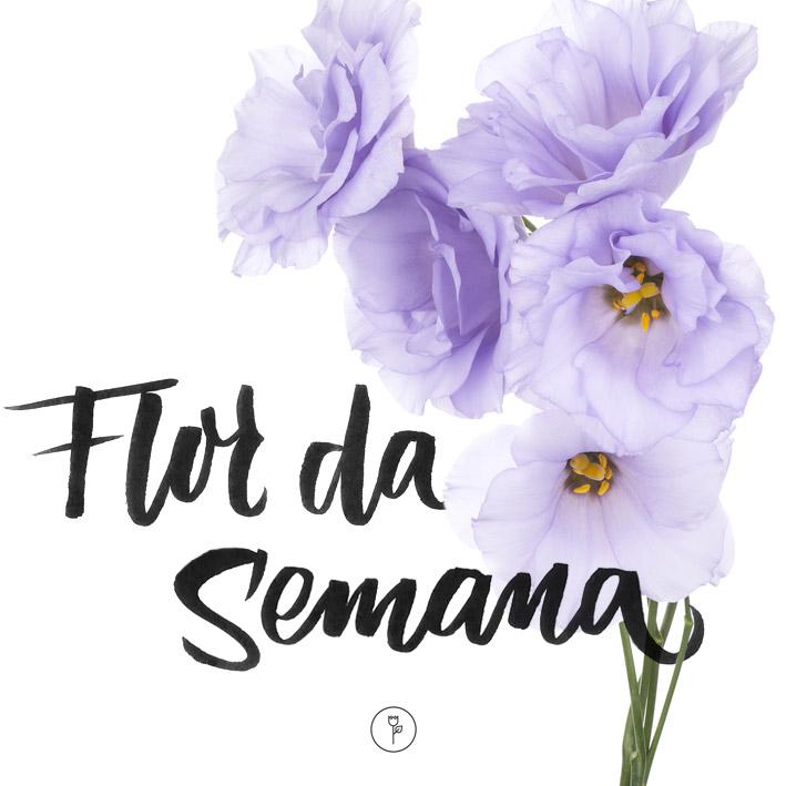FlorDaSemana01