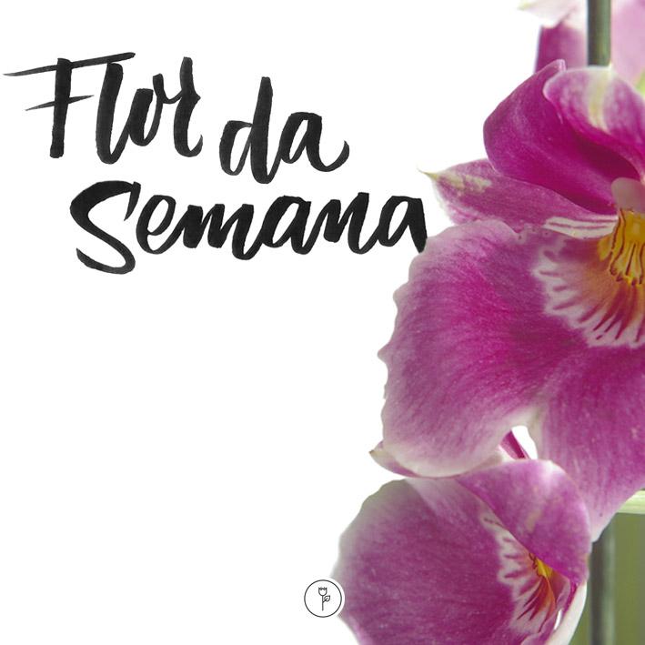 FlorDaSemana04
