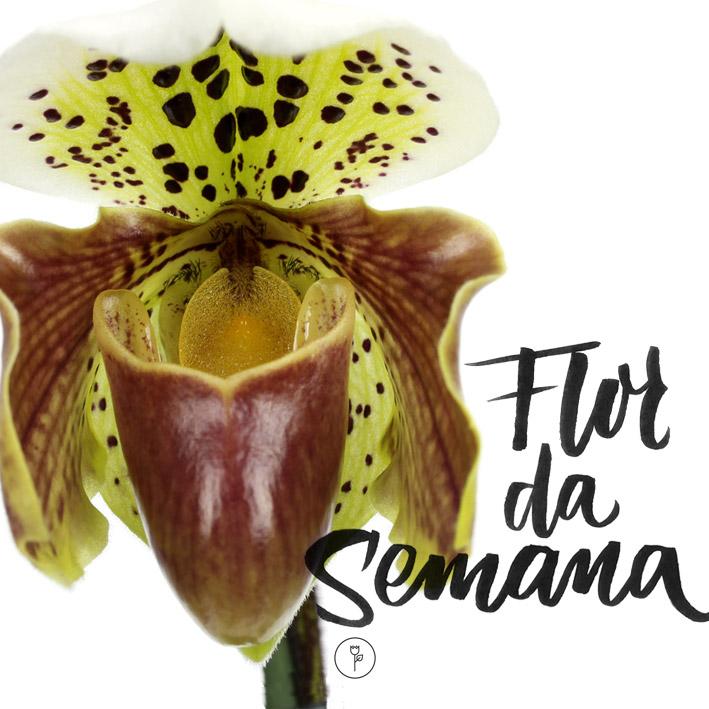 FlorDaSemana07