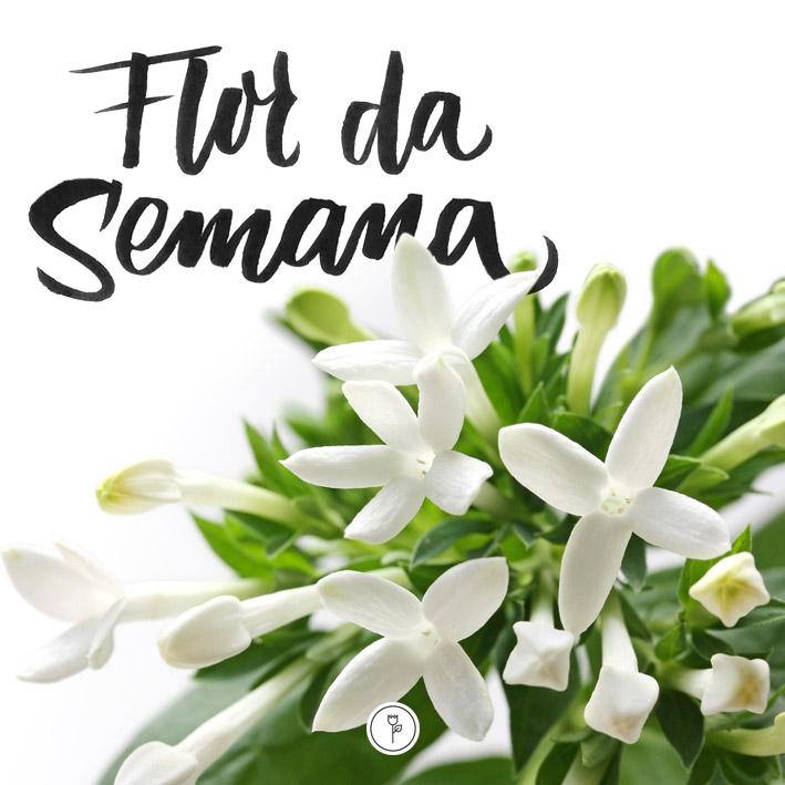 FlorDaSemana13