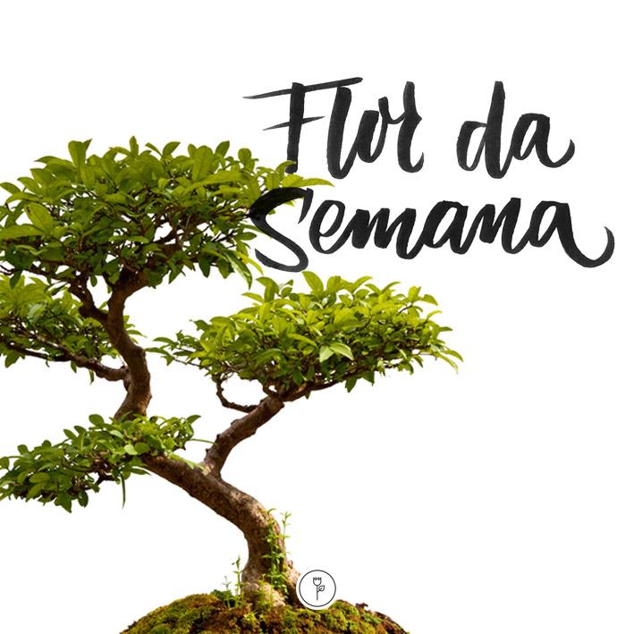 FlorDaSemana14