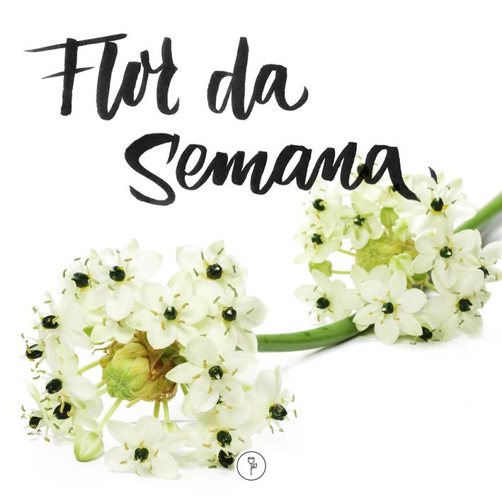 FlorDaSemana15