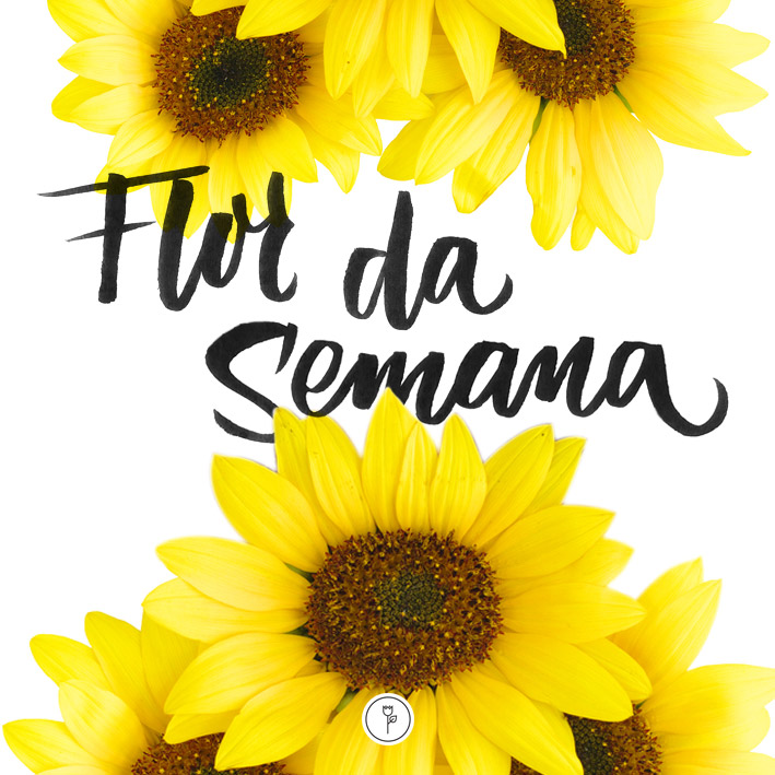 FlorDaSemana16