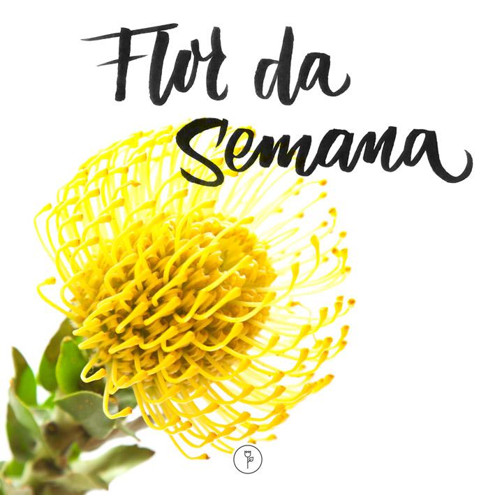 FlorDaSemana21