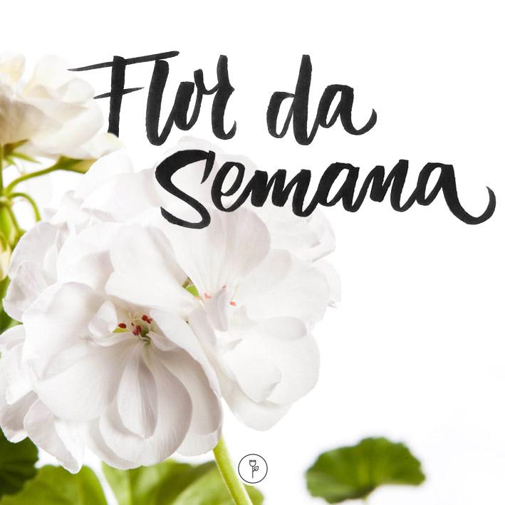FlorDaSemana22