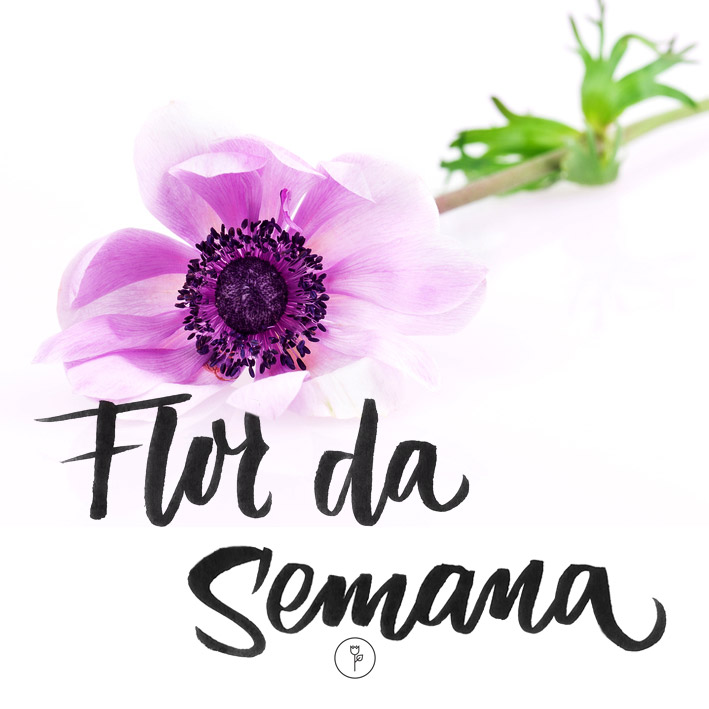 FlorDaSemana23