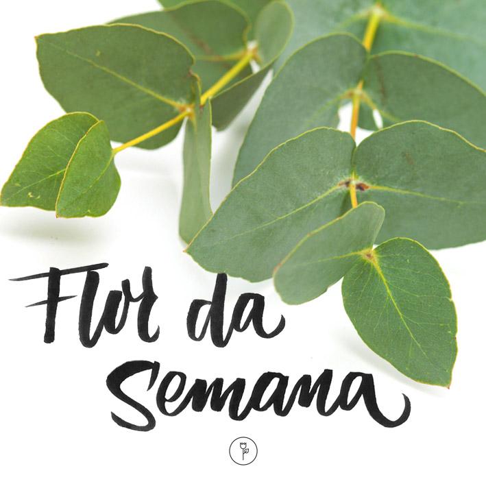 FlorDaSemana24