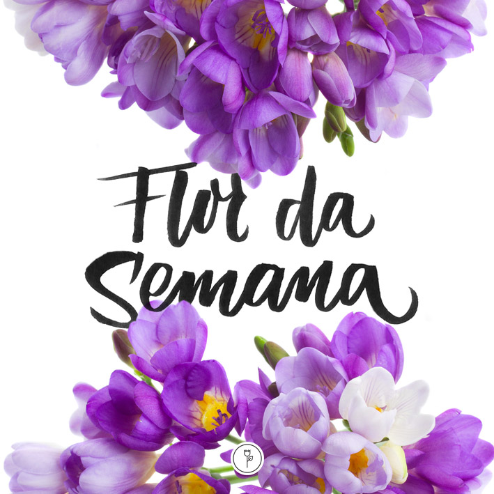 FlorDaSemana26