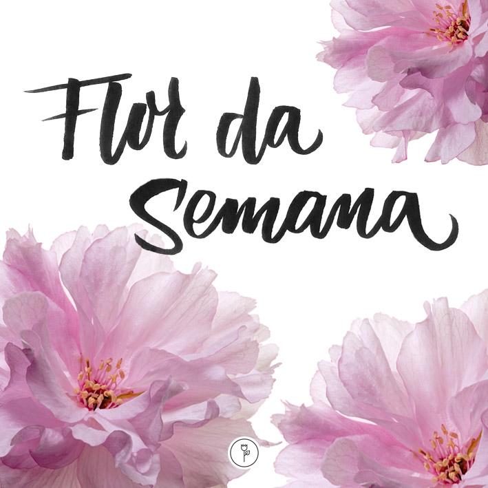 FlorDaSemana28