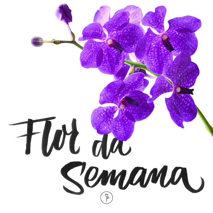 FlorDaSemana29