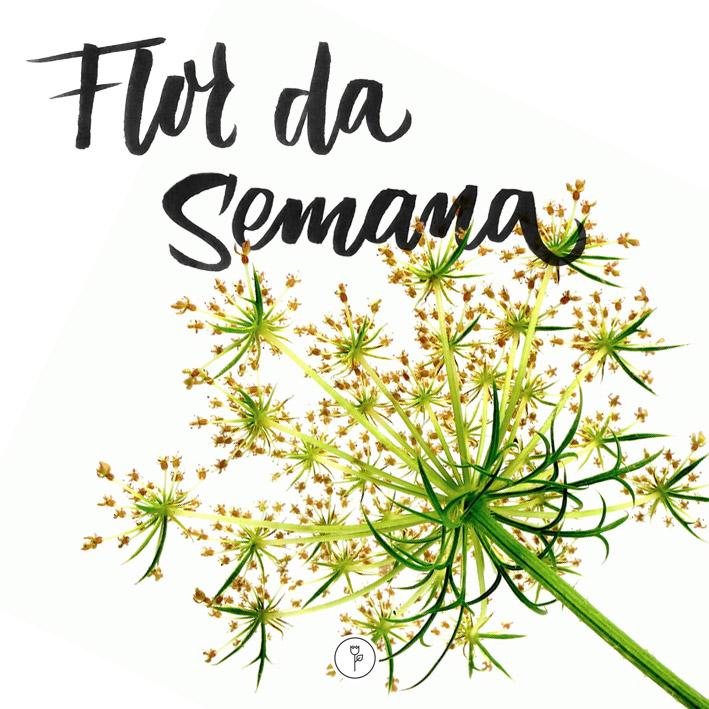 FlorDaSemana30