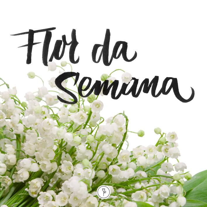 FlorDaSemana33