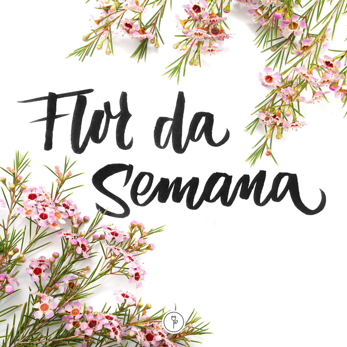 FlorDaSemana37