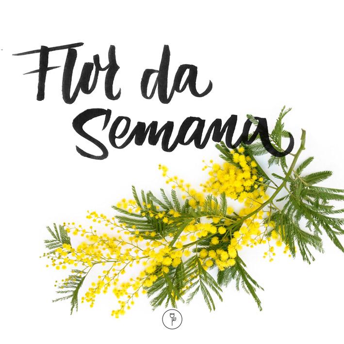 FlorDaSemana39
