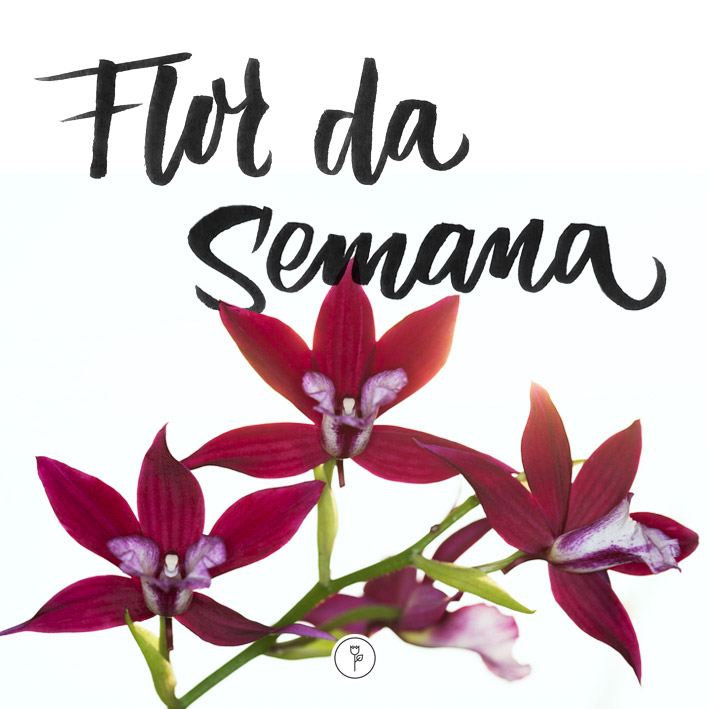 FlorDaSemana41