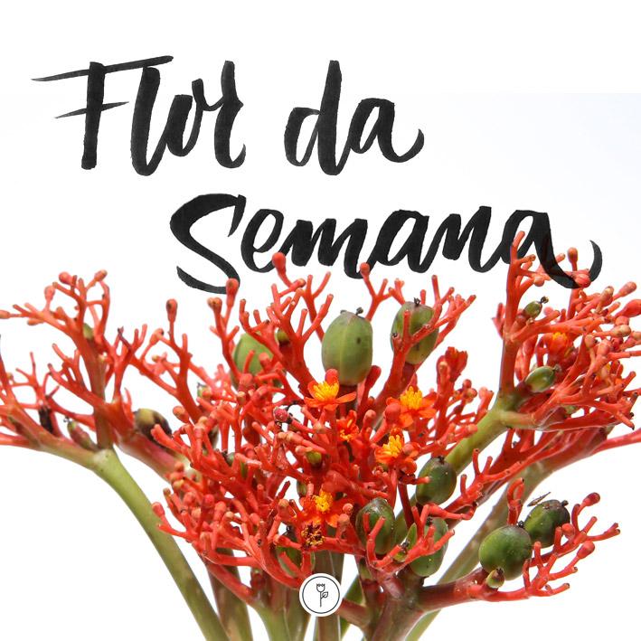 FlorDaSemana43
