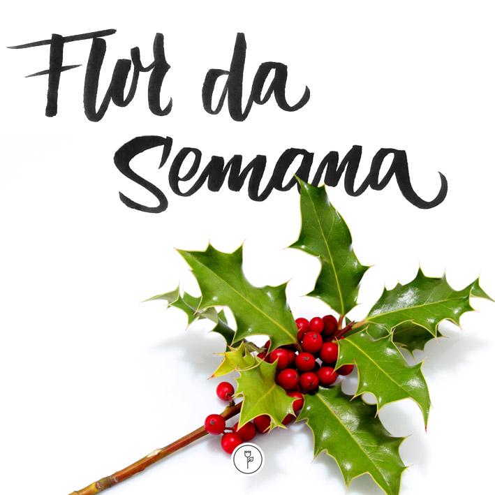 Azevinho - FlorDaSemana44