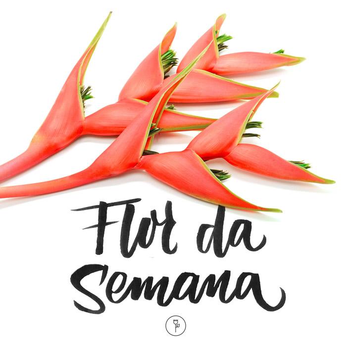 HELICÔNIAS - FlorDaSemana46