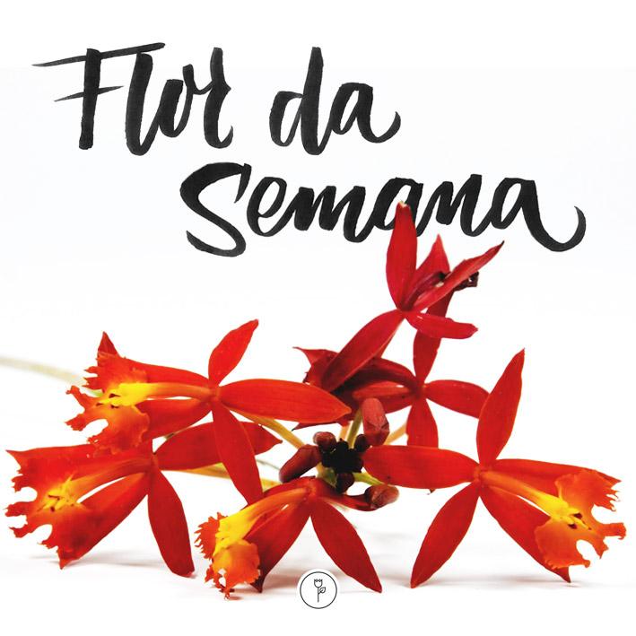 FlorDaSemana_0411