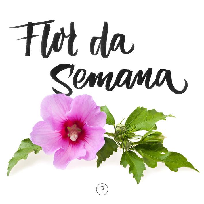 FlorDaSemana - Hibisco