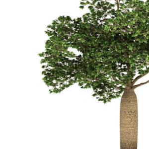 sobre a arvore baoba