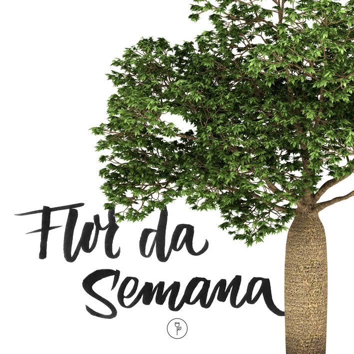 Baobá Banner