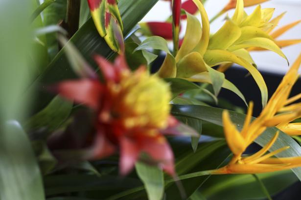 Toques de Verão - Arranjo de Flores