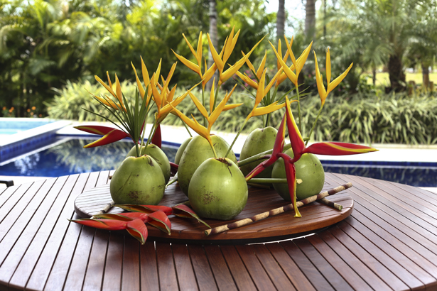 cachepot de coco verde