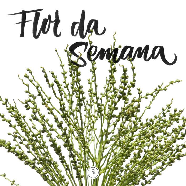 Flor da Semana - Semente de Fênix