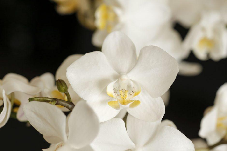 orquideasmilplantas
