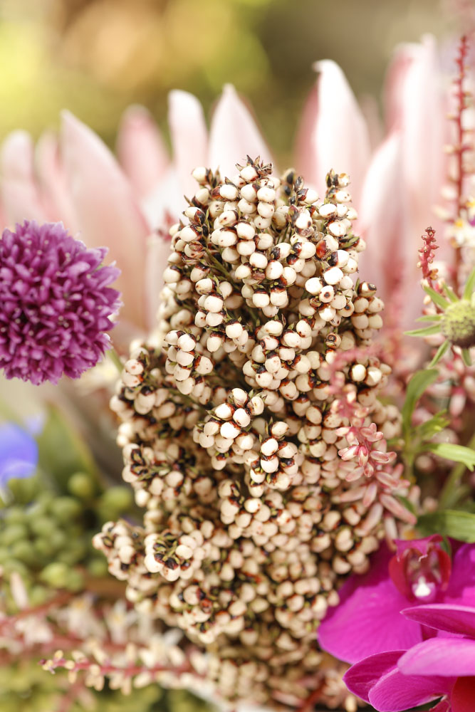 arranjos florais Milplantas