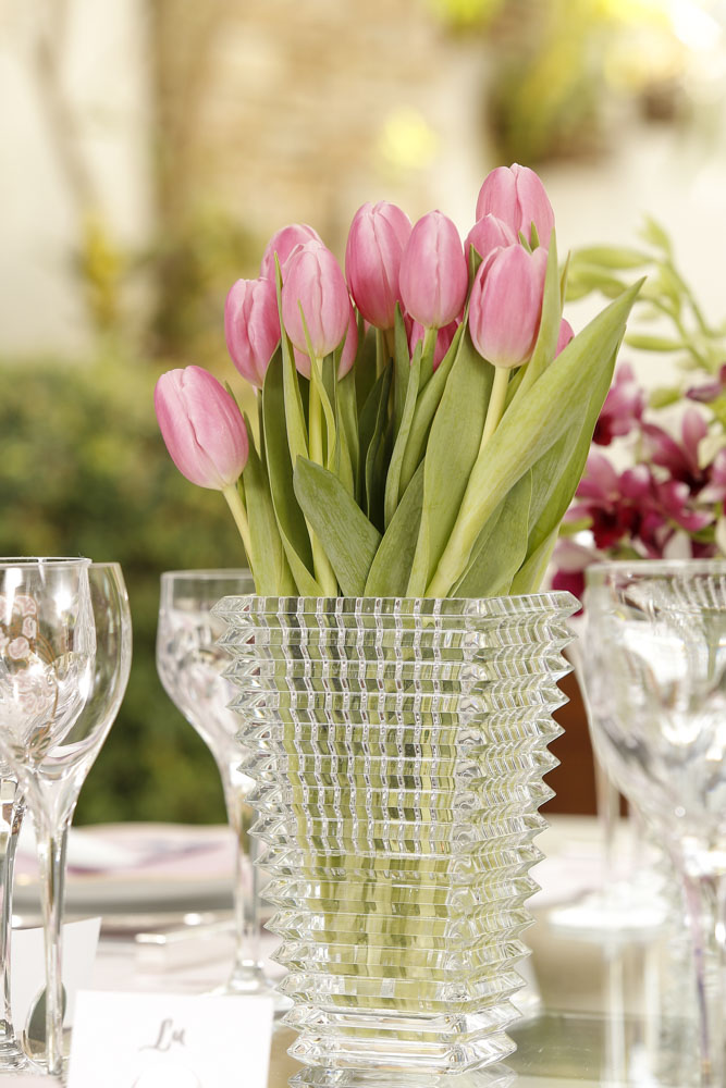 tulipas rosas