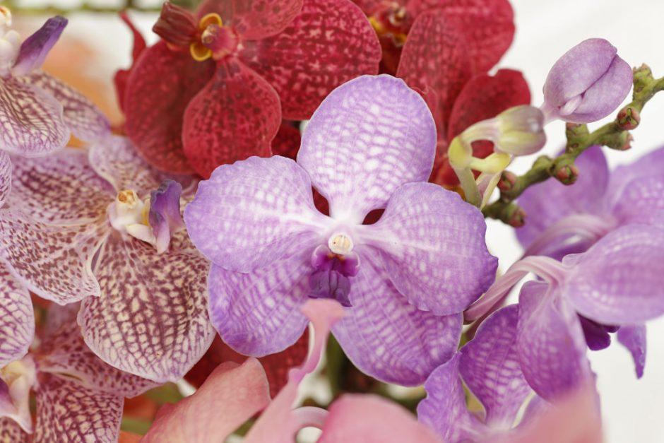 orquidias coloridas