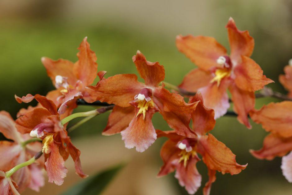 flores outonais