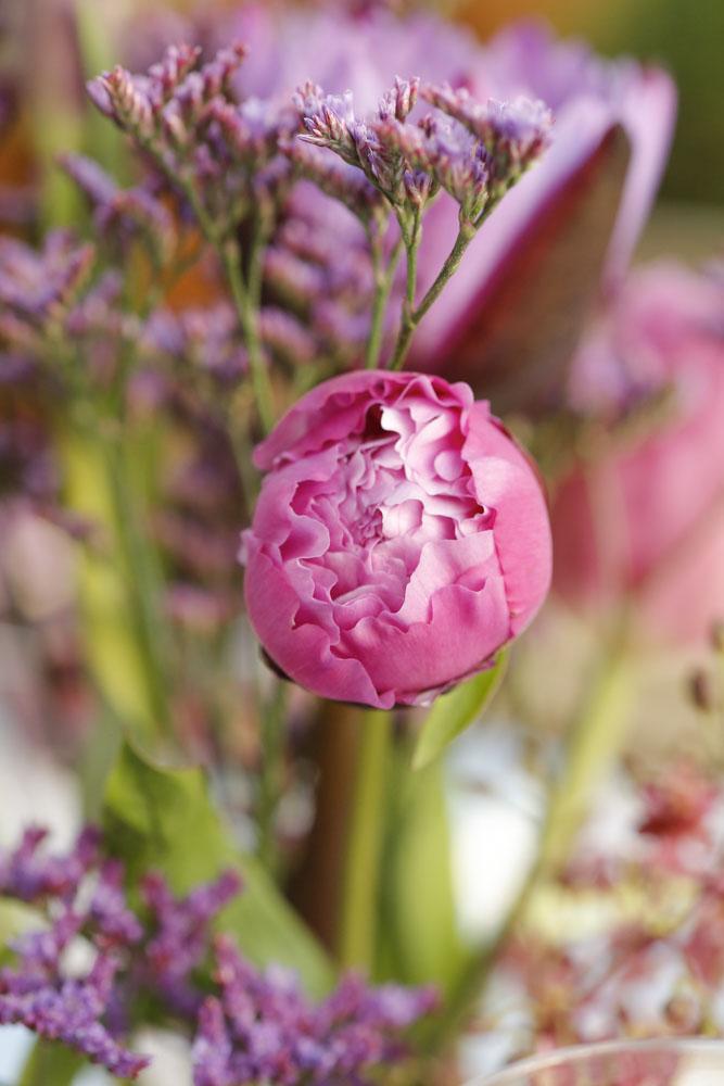 flores maravilhosa