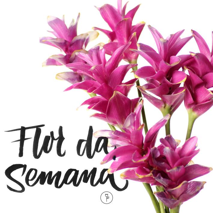 flor de Curcuma