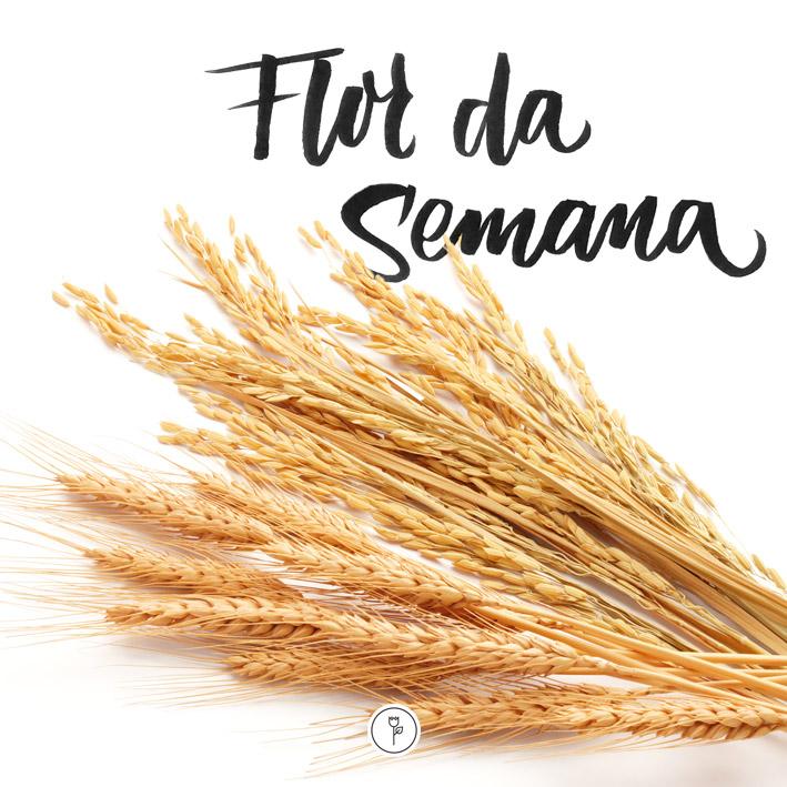 Flor de arroz