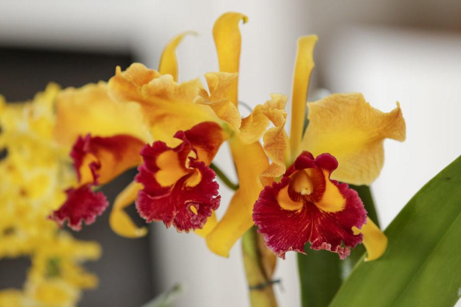 orquideas milplantas