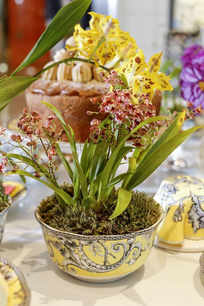 mini orquídeas em arranjo Milplantas