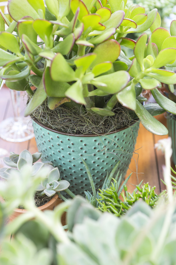 vaso de cerâmica verde com suculentas